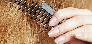 wypadanie włosów, zabieg mezoterapia mikroigłowa, osłabione włosy, łysienie, większa gęstość włosów opole